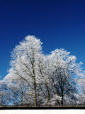 Winter-trees Royalty Free Stock Photography