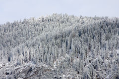 Winter Trees. Winter tree line and mountain Royalty Free Stock Images