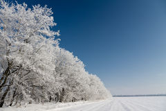 Winter trees. Covered by white hoar-frost Royalty Free Stock Photos
