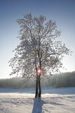 Winter trees. Winter in the Black Forest in Germany Stock Photos