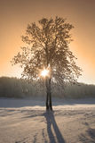 Winter trees. Winter in the Black Forest in Germany Royalty Free Stock Image