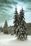 Winter Trees. Winter landscape with trees and clouds Stock Photography
