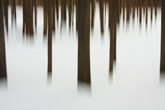 Winter Trees Abstract, Montana Stock Photos