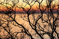 Winter trees against sunset. Branches of a bald tree against sunset over Marmara sea Stock Photography