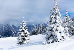 Winter trees in alp mountains Royalty Free Stock Photo