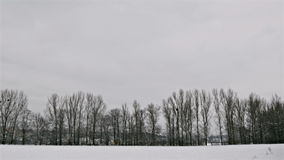 Winter Trees in Avenue and Snow Field. Winter snow and snowy field near the city stock video footage