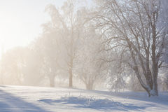 Winter trees in backlit Royalty Free Stock Images