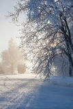 Winter trees in backlit Royalty Free Stock Photo