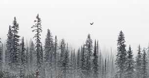 Winter trees banner. In morning mist Stock Images