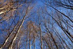 Winter trees and blue sky Stock Image