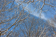 Winter Trees And Blue Sky Stock Photo