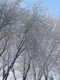 Winter trees branches covered snow against blue sky. Beautiful winter nature in sunny day Stock Image