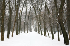 Winter trees in the city park Stock Image
