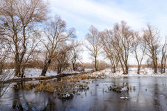 Winter Trees  Close to the Dnieper River Royalty Free Stock Images