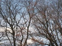 Trees with sky royalty free stock image