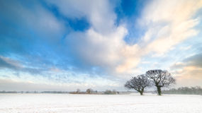 Winter Trees and Cloudy Blue Skies. Two trees stand in a snow covered field while attractive blue skies are inhabited by dramatic white clouds above. In the Royalty Free Stock Photo