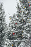 Winter trees with colorful bulbs, christmas tree. Royalty Free Stock Images