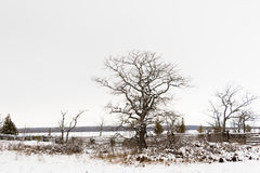 Winter Trees in the countryside of Canada Royalty Free Stock Image