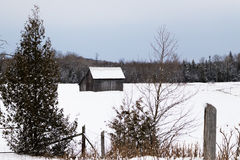 Winter Trees in the countryside of Canada Royalty Free Stock Images