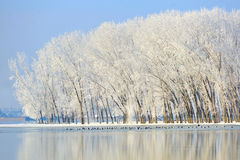 Winter trees covered with frost Royalty Free Stock Image