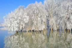 Winter trees covered with frost Stock Photography