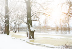 Winter trees covered with frost. Royalty Free Stock Photo