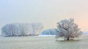 Winter trees covered with frost Stock Image