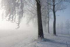 Winter trees covered with hoarfrost Stock Photos