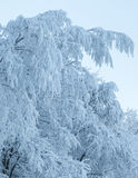 Winter trees covered with hoarfrost Stock Photography