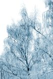 Winter trees covered with snow Royalty Free Stock Images