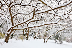 Winter. Trees covered with snow. Stock Photo