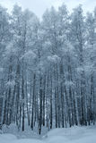 Winter trees covered with snow Stock Photo