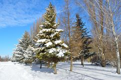 Winter trees covered with snow against the blue sky Stock Image