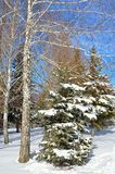 Winter trees covered with snow against the blue sky Royalty Free Stock Photography