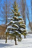 Winter trees covered with snow against the blue sky Royalty Free Stock Photos