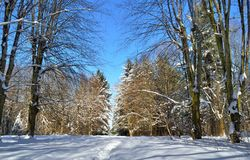 Winter trees covered with snow against the blue sky Royalty Free Stock Image
