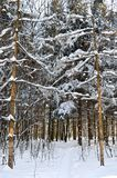 Winter trees covered with snow against the blue sky Royalty Free Stock Photo