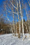 Winter trees covered with snow against the blue sky Stock Photo