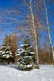 Winter trees covered with snow against the blue sky Stock Photos