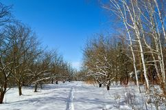 Winter trees covered with snow against the blue sky Royalty Free Stock Images