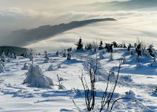 Winter trees covered by snow royalty free stock photos