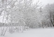 Winter trees covered in white fluffy snow stock image