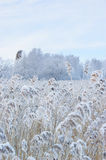 Winter trees and dry grass Stock Photo