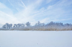 Winter trees and dry grass Stock Images
