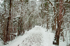 Winter trees in the English countryside. Royalty Free Stock Photography