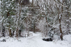 Winter trees in the English countryside. Royalty Free Stock Photo
