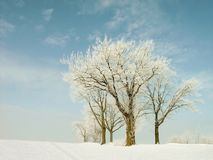 Winter trees on the field Royalty Free Stock Image