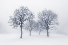 Winter trees in fog Royalty Free Stock Photography