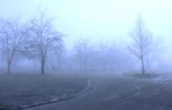 Winter trees in fog Royalty Free Stock Image