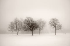 Winter trees in fog Stock Photo